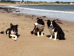 The gang at the beach at Nigg.